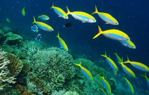 We care PROTECTING OUR SEAS